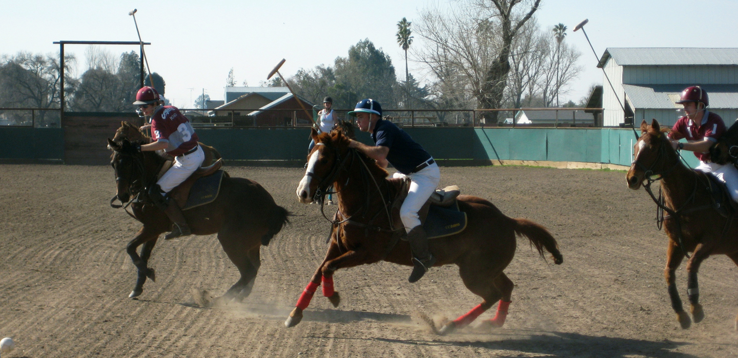 Horces and humans playing polo